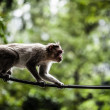 Stock Photo: Sacred Monkey Forest in Ubud Bali Indonesia.