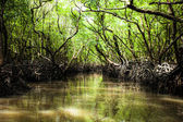 Mangrove tree in Havelock Island in Andamans, India. — Stock Photo