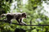 Sacred Monkey Forest in Ubud Bali Indonesia. — Stock Photo
