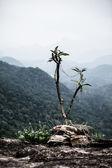 Beautiful mountains, Ghats, in Kerala, India — Stock Photo
