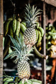 Fresh pineapples in a marketplace — Stock Photo