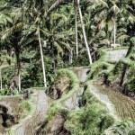 Green rice terraces in Bali, Indonesia — Stock Photo #19248105