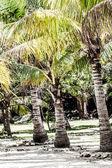 Zielone drzewo na białej, piaszczystej plaży. malcapuya wyspie, coron, filipiny. — Zdjęcie stockowe