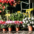 Flowers in street market - Stock Photo