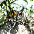 Eagle Owl in natural background - Stock Photo