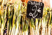 A neat row of spring onions bundled for sale at the market. — Stock Photo