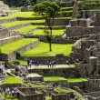 Machu Picchu, the ancient Inca city in the Andes, Peru — Stock Photo