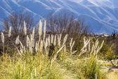 Quebrada de humahuaca in argentina. — Foto Stock