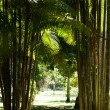 Lush green palm leaves in tropical forest — Stock fotografie