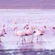 Stock Photo: Flamingos on lake in Andes, southern part of Bolivia