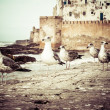 Morocco Essaouira UNESCO World Heritage Site — Stock Photo