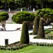 Outstanding cypress trees in Retiro Park in Madrid, Spain — Stock Photo #27772611