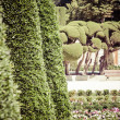 Outstanding cypress trees in Retiro Park in Madrid, Spain — Stock Photo