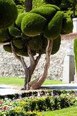 Uitstekende cipressen in retiro park in madrid, spanje — Stockfoto