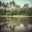 Palm tree tropical forest in backwater of Kochin, Kerala, India — Stock Photo #28006287
