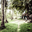 Green Palm Forest in Colombian Island — Stock Photo