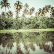 Palm tree tropical forest in backwater of Kochin, Kerala, India  — Stock Photo