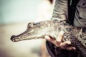 Unga cayman reptil med vackra ögon — Stockfoto