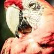 A red and green macaw closeup over blurred background. — Stock Photo