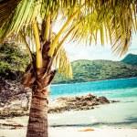 Green tree on a white sand beach. Malcapuya island, Coron, Philippines. — Stock Photo #28157025