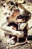 Familjen markattartade på heliga monkey forest ubud bali indonesien — Stockfoto