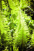 Dynamic fern composition, vibrant green background texture — Stock Photo