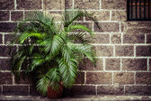 Plam house decoration over brick backgropund — Stock Photo