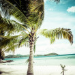 Green tree on a white sand beach. Malcapuya island, Coron, Philippines. — Stock Photo #28223465