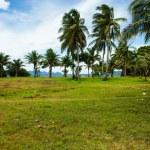 Green tree on a white sand beach. Malcapuya island, Coron, Philippines. — Stock Photo #28223503