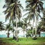 Green tree on a white sand beach. Malcapuya island, Coron, Philippines. — Stock Photo #28229975