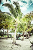 Groene boom op een wit zandstrand. malcapuya island, coron, filippijnen. — Stockfoto