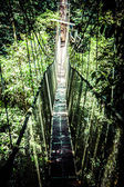 Suspension bridge to mangrove tropical forest. — Stock Photo