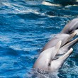 Dolphins swim in the pool — Stockfoto