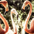 Pink flamingos against blurred background — Stock Photo #28791777