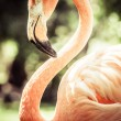 Stock Photo: Pink flamingos against blurred background