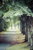 Orman yama üzerinde arka plan bulanık — Stok fotoğraf
