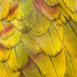 Colorful Macaw Plumage closeup — Stock Photo