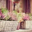 Pink and purple heather in decorative flower pot — Stock Photo