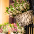 Pink and purple heather in decorative flower pot — Stockfoto