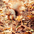 Squirrel, Autumn, acorn and dry leaves — Stock Photo #34534793