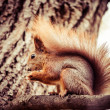 Squirrel, Autumn, acorn and dry leaves — Stock Photo