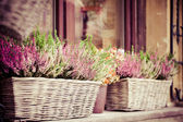 Pink and purple heather in decorative flower pot — Stok fotoğraf