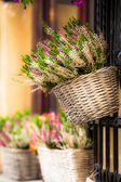Pink and purple heather in decorative flower pot — ストック写真