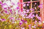 Beautiful pink flowers — Stock Photo