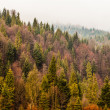 Autumn Beskid mountain forest background, Poland — Stock Photo