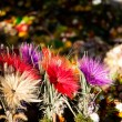 Stockfoto: Dry daisy bouquet in Zakopane, Poland