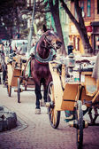 Horse harnessed to sled on the street Krupowki in Zakopane in Poland — Stock Photo