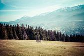 Green valley in the high Tatra mountains in Zakopane, Poland. — Stockfoto