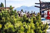 Green pine tree in the high Tatra mountains in Zakopane, Poland. — Stock Photo