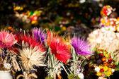 Dry daisy bouquet in Zakopane, Poland — Stock Photo